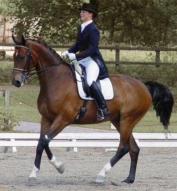 Welcome to my website about Classical Dressage!