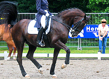 A Top Rider In The Warm Up Arena